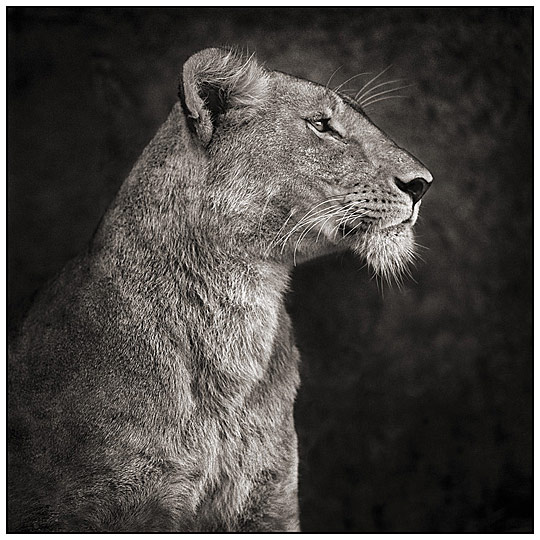ani01 Wild animals photography showcase