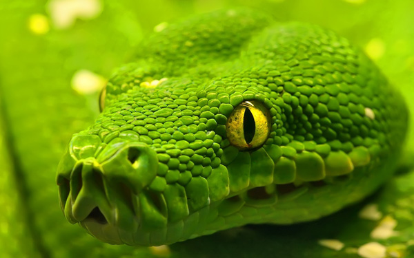 green anaconda 1920x1200 Stunning Wallpapers For Your Desktop #5