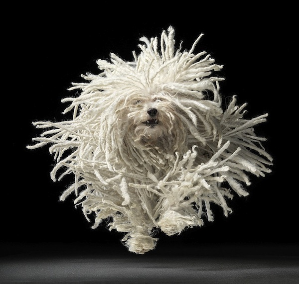 timflach0 The Fine Art of Dogs