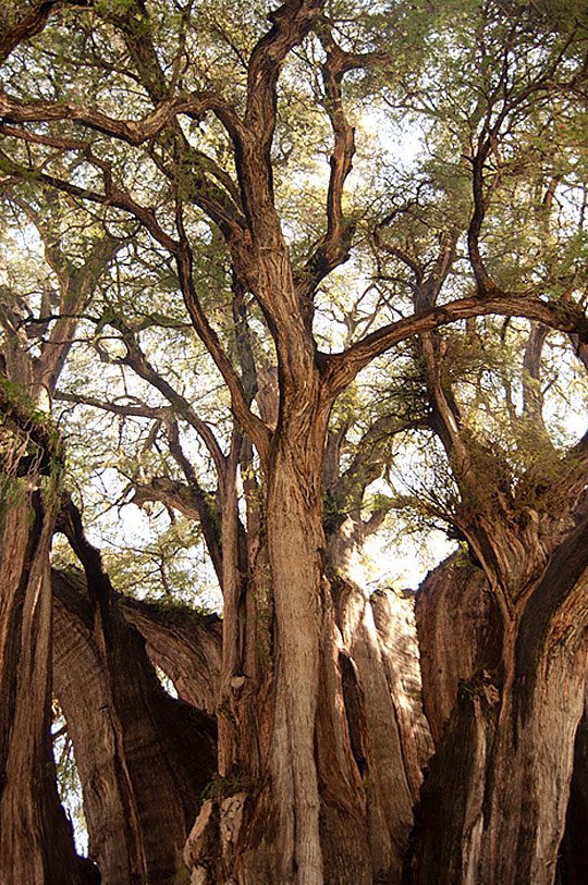 t01 Trees – an Amazing Variety of Shapes