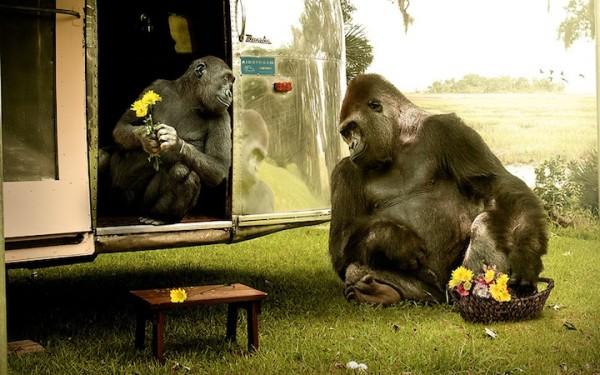 jamesquantzjr31 600x375 The Secret Lives of Apes