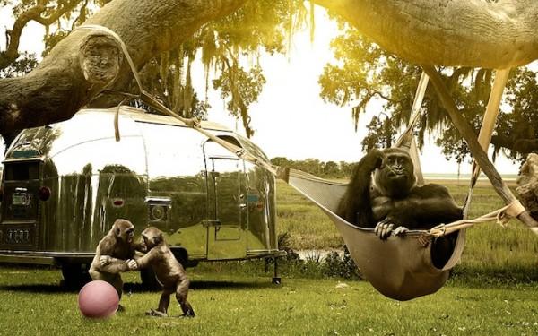jamesquantzjr6 600x375 The Secret Lives of Apes