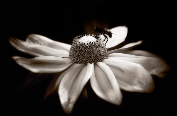 flo1a 50 Inspirational Examples of Flower Photography