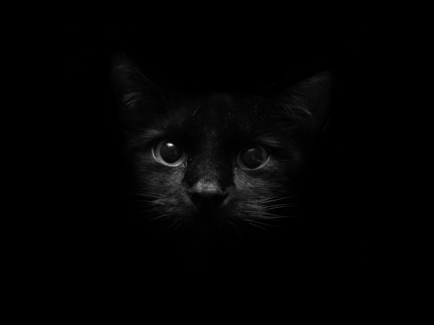 bw1a Stunning Black and Dark Wallpapers