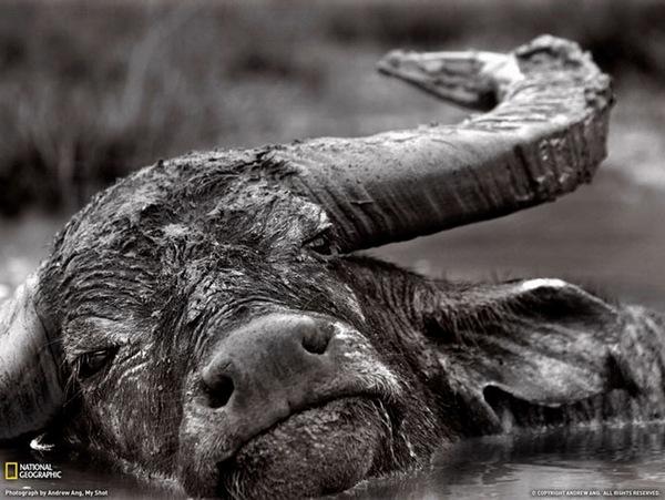 ng2a Wonderful National Geographic Photos