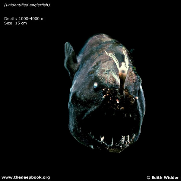 """td1g """"The Deep: The Extraordinary Creatures of the Abyss"""" by Claire Nouvian"""