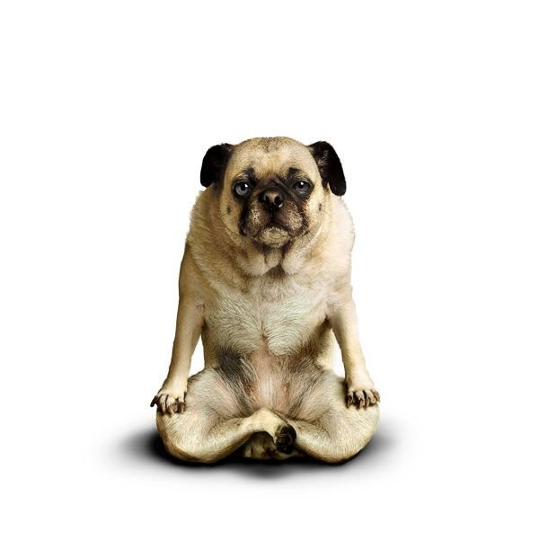 yd1k Yoga dogs by Dan Borris