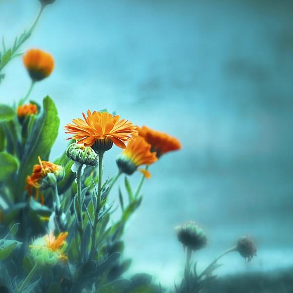 395602 600x600 Photography by Mebilia