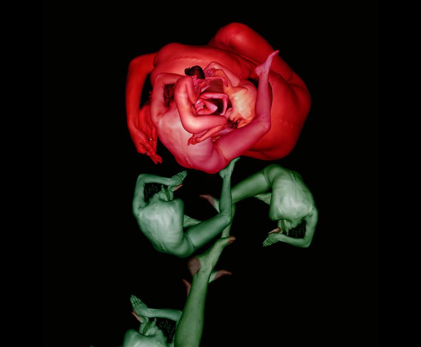 cw4d Human flowers by Cecelia Webber
