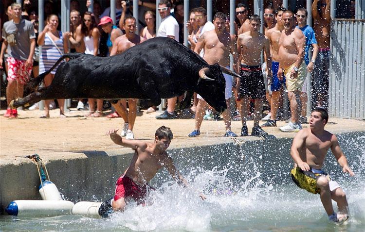 167 - amazing bull spain