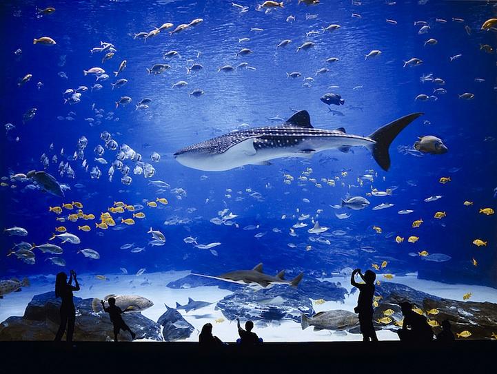 georgiaaquarium1 The Worlds Largest Aquarium