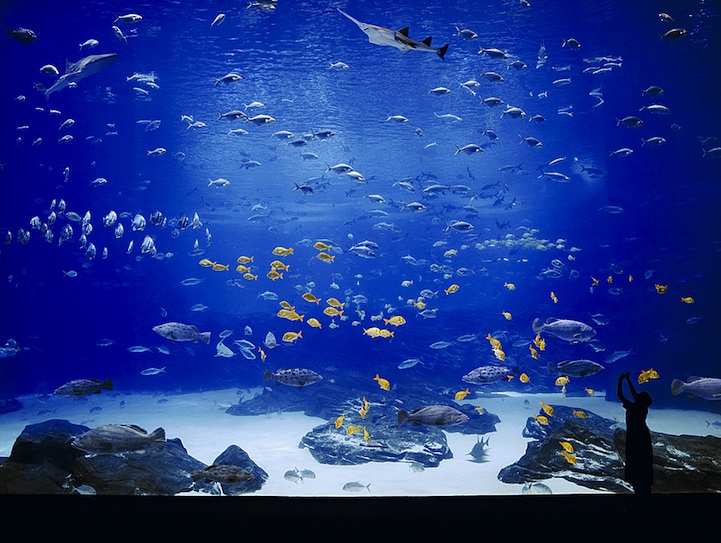 georgiaaquarium2 The Worlds Largest Aquarium