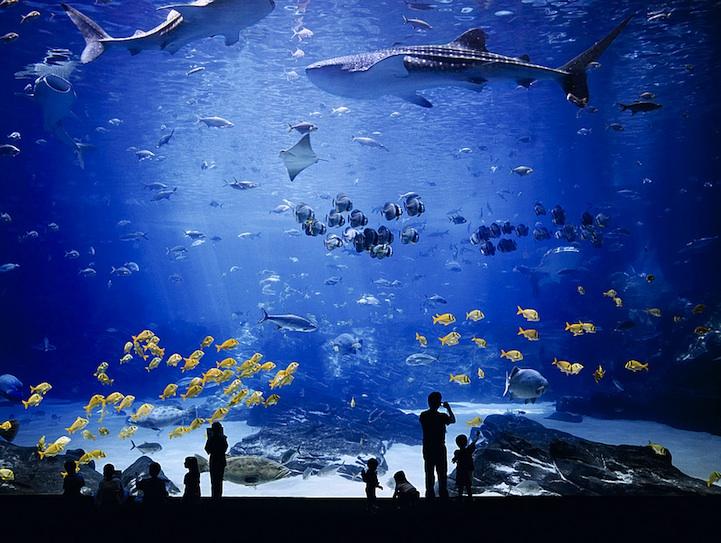 georgiaaquarium3 The Worlds Largest Aquarium