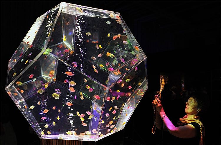 169 Exhibition in Tokyo Turns Aquarium into Works of Art