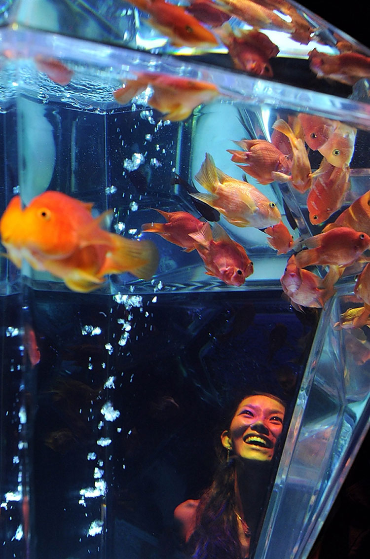 237 Exhibition in Tokyo Turns Aquarium into Works of Art