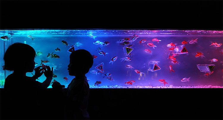425 Exhibition in Tokyo Turns Aquarium into Works of Art