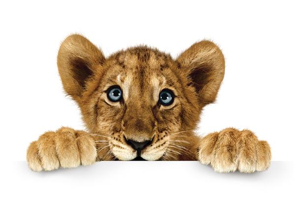 tl7a Telus the lion