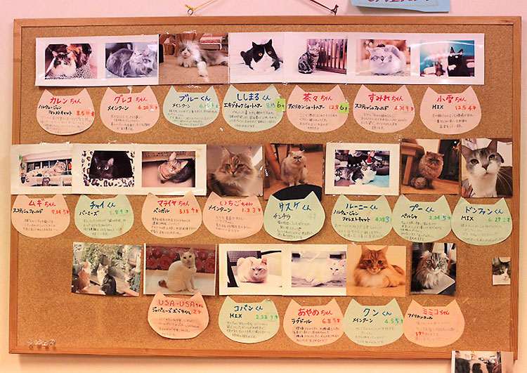 285 Cat Cafe in Osaka Japan