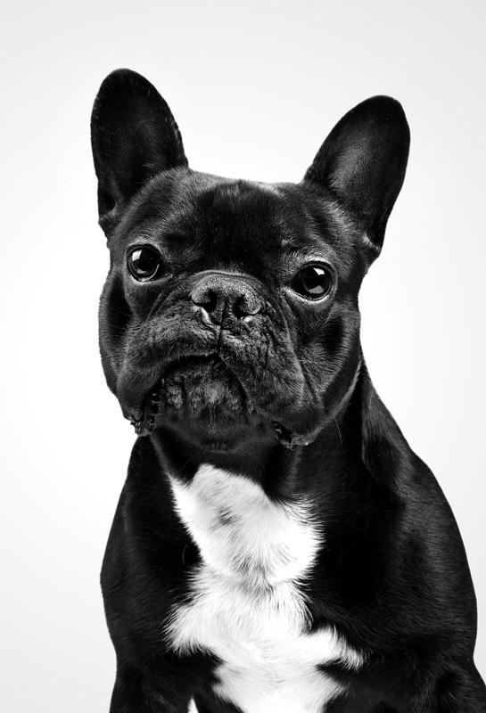 i1a166 DOG PORTRAITS by Marko Savic
