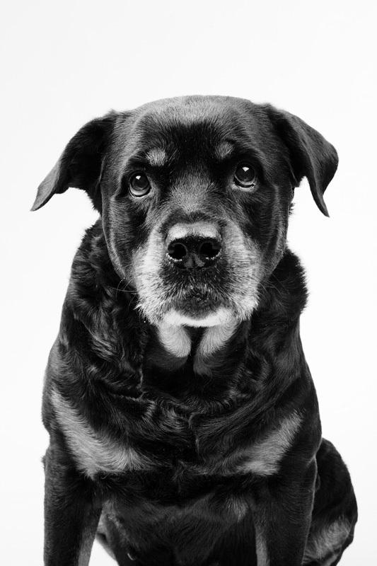 i1b165 DOG PORTRAITS by Marko Savic
