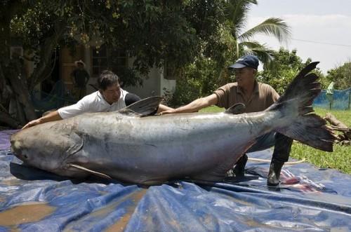10. Congo killer Top 10 River Monsters
