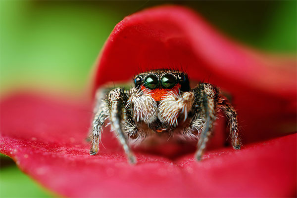 18 insect macro photography1 35 Macro Photographs That You Will Love
