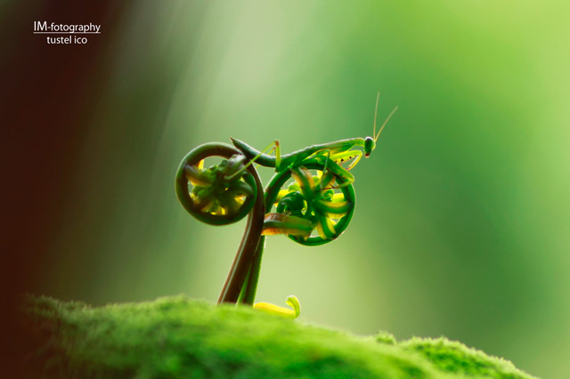 bug Bug on a Bike