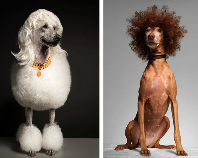 feeldesain pets portraits Pets Portrait Series