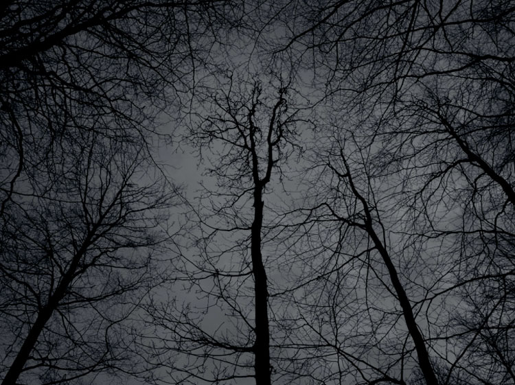 forest 2 Photography by Kenneth Rimm