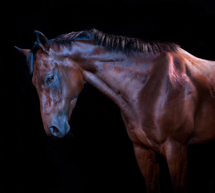 horses5 Photography by Andrew McGibbon