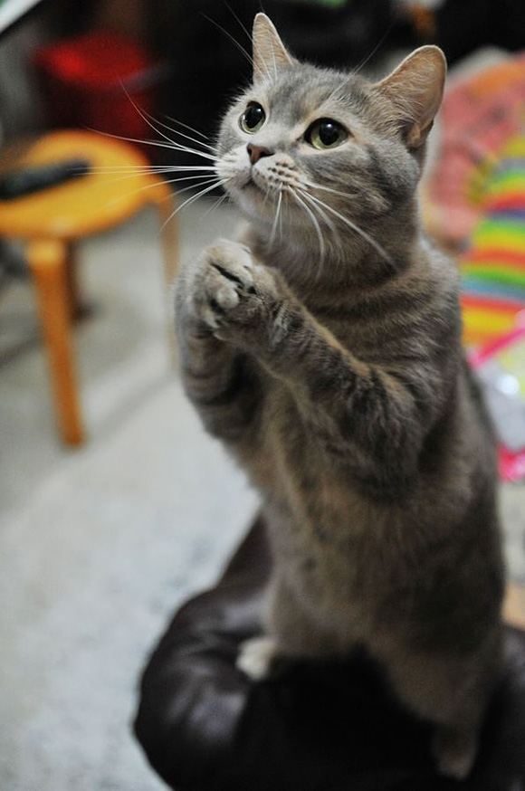 i am begging for some tuna l11 45 Cute Animal Photos That Will Cheer You Up!