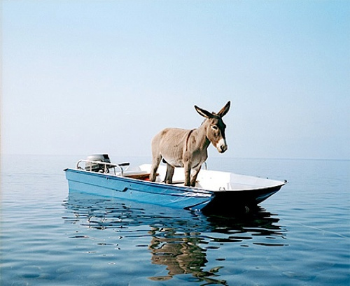 tumblr m39gugE2vd1rse1ipo1 500 A donkey on a boat