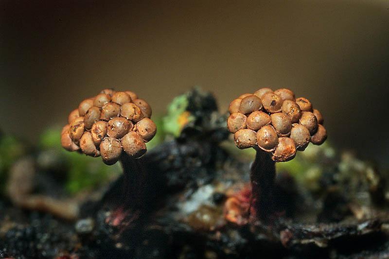 0112 Mucous Mushrooms