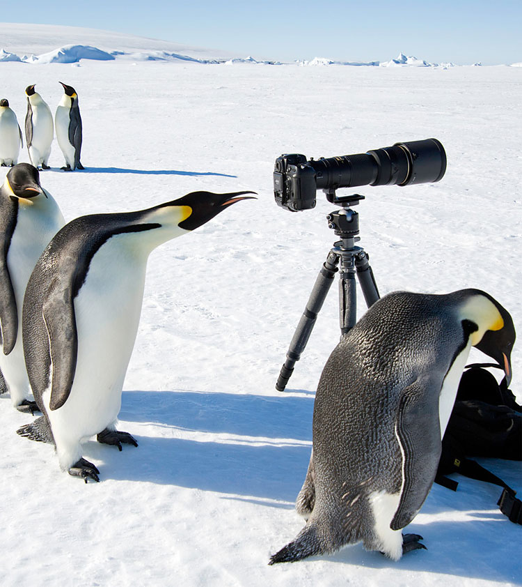 149 Photo of the Day: Penguins Of Antarctica