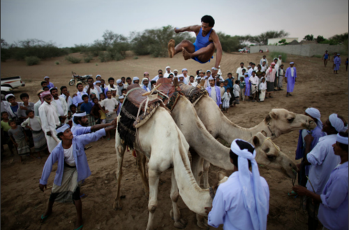 tumblr m3t8zdh44P1rse1ipo1 500 Camel jumping.