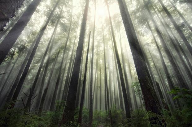 i1a203 Nature in America: La Push, WA