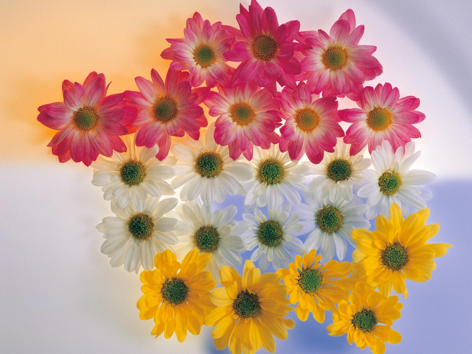 60 Best Flowers Hd Images Flowers Flower Wallpaper Beautiful Flowers