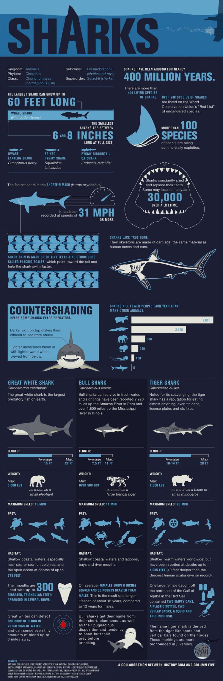 sharks infographic 750x2285 Shark Wranglers
