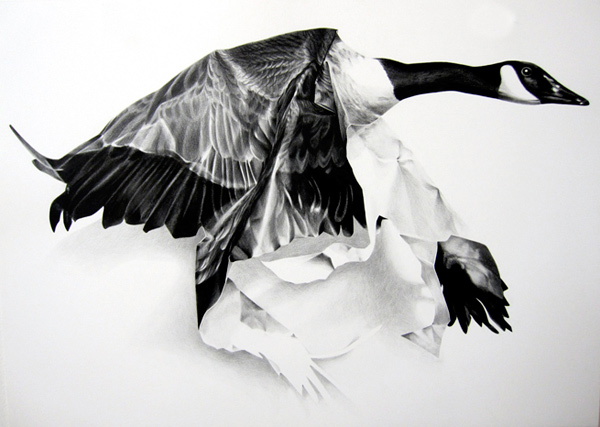 i1a85 Wax Pencil Bird Drawings by Christina Empedocles