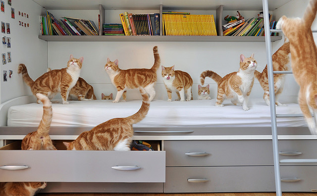 pippy timmy 2 Amazing Cloned Kitties