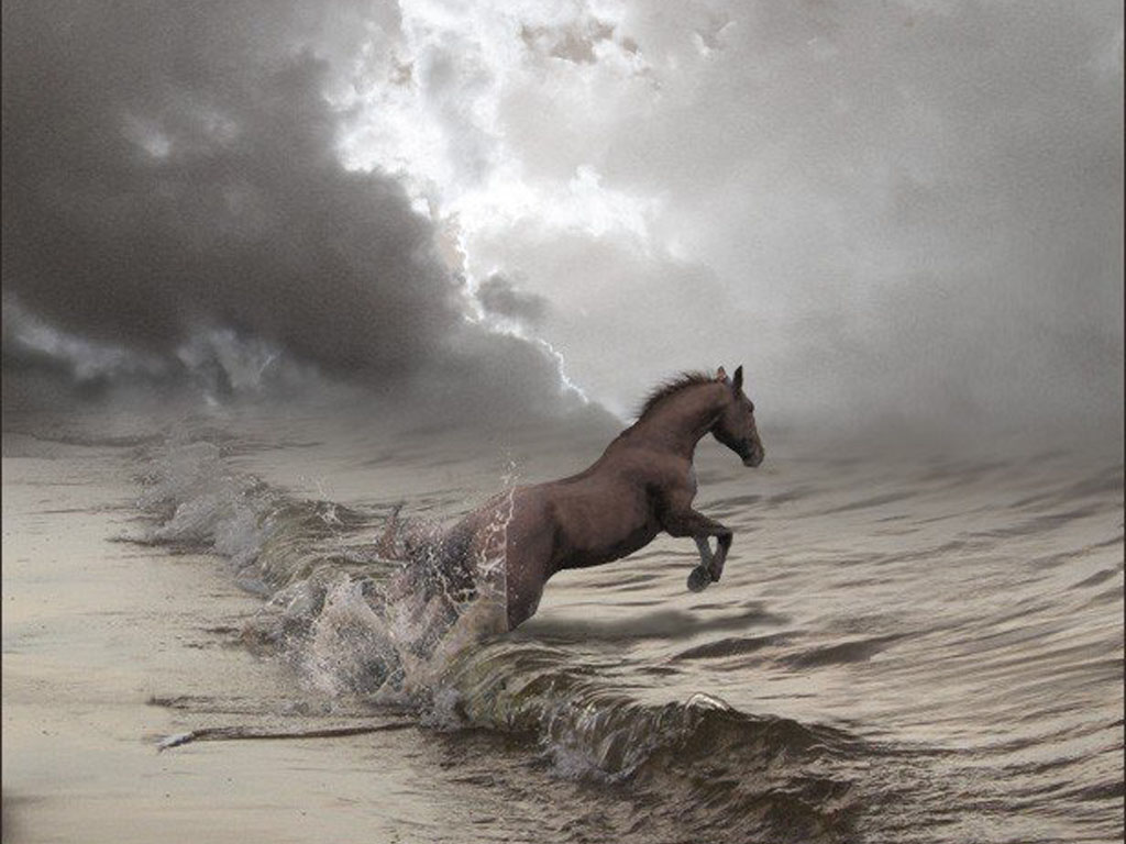 Horse Wallpapers1 Amazing Photos From The World | Hard To Believe