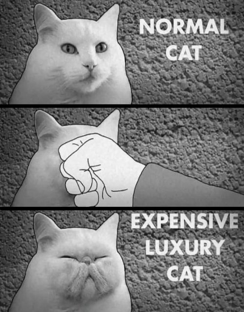 expensive cat Want a most expensive cat?