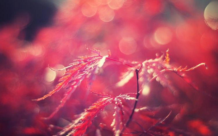 Digital art selected for the Daily Inspiration #1271
