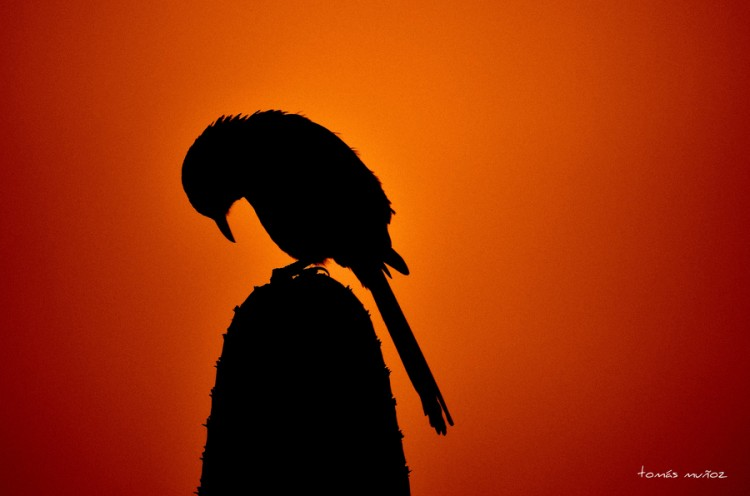 30+ Astonishing Examples of Silhouette Photography 08 @ GenCept 750x496 Astonishing Collection of Silhouette Photography