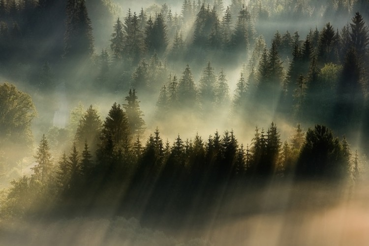 Breathtaking Photography of Early Morning Fog Across Majestic Landscapes 13 @ GenCept 750x500 Early Morning Fog Across Majestic Landscapes
