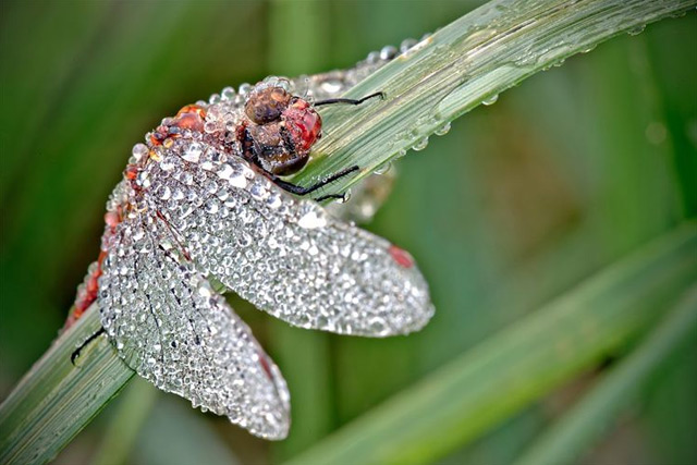 Macro David 7 David's Photography Of Dew Covered Insects
