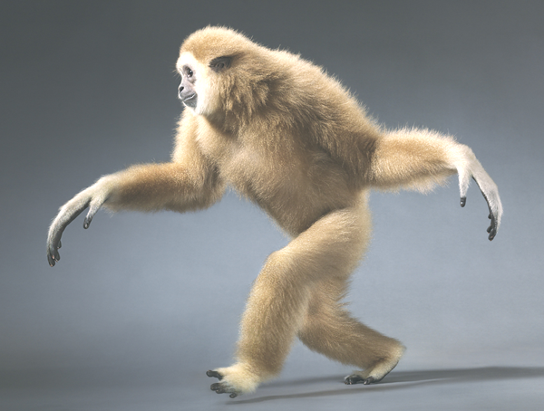 animal photography tim flach 13 Wild Animals Like You've Never Seen Them Before