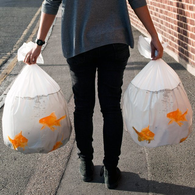 Goldfish Happy Sack Bin Bags