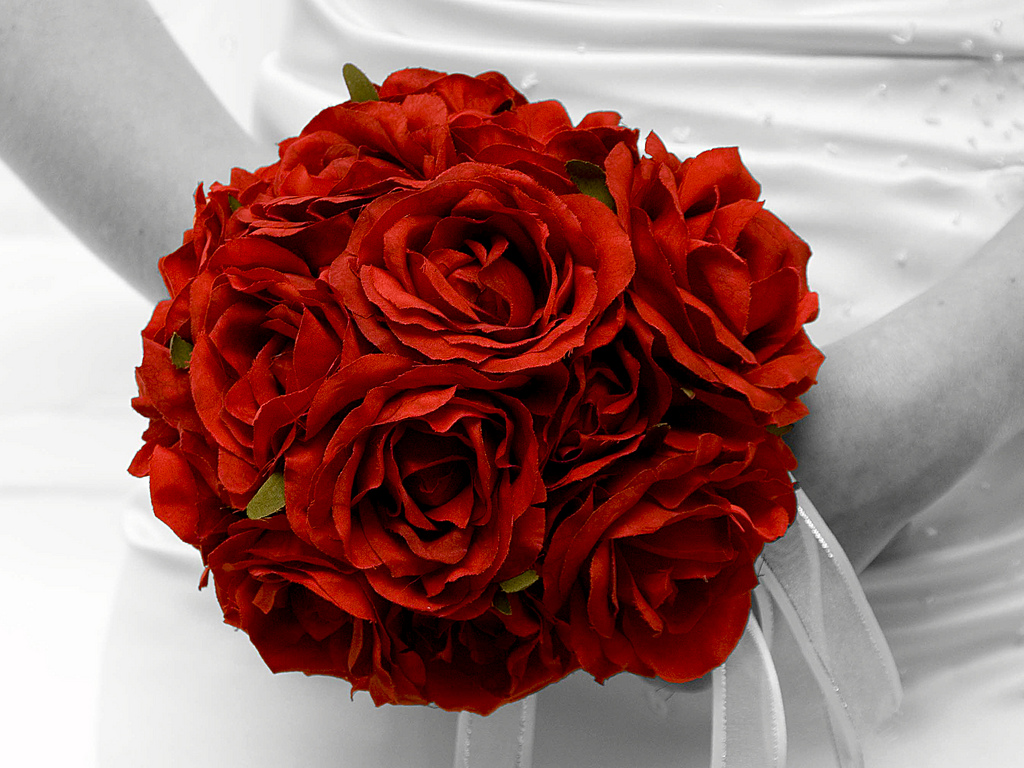 Bright Red1 Stunning Red Photos