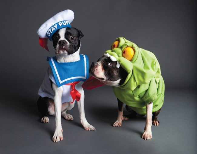 Ghostbuster Dogs1 650x506 Funny pet costumes